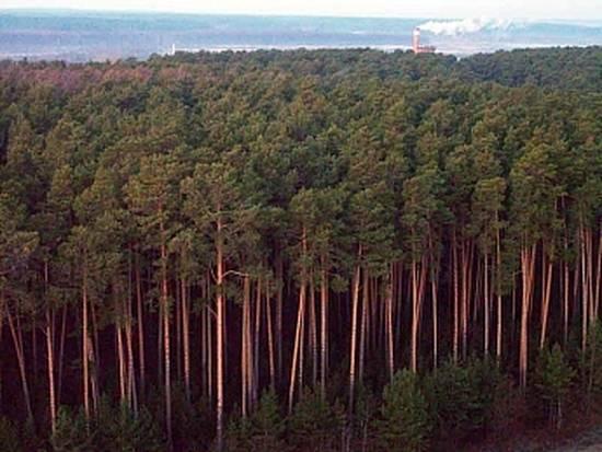 лес лиственница