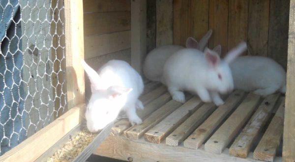 Как сделать крольчатник в фото