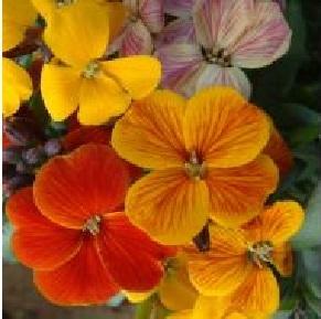 Какие цветы посадить на даче весной. Посев цветов в грунт.